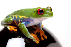 Frog Looking For You Stock Image