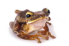 Frog looking at you Stock Photo