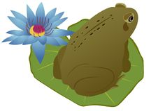 Frog on a lotus leaf Stock Images