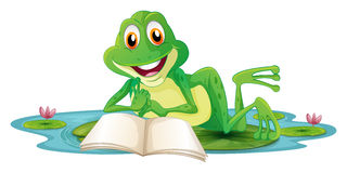 A frog lying while reading a book Stock Images