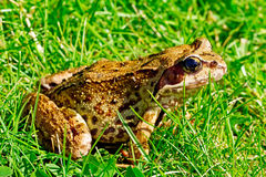 Frog macro picture Stock Images