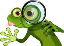 Frog and magnifying glass Royalty Free Stock Photos