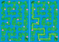 Frog maze Royalty Free Stock Photography