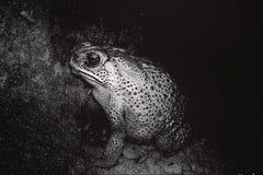 Frog at mud. stock image