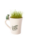 Frog, mug and grass Stock Images