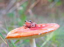 Frog and mushroom Stock Image