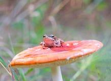 Frog and mushroom Stock Image
