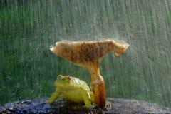 Frog and mushroom. Frog under the mushroom hiding from the rain royalty free stock photos