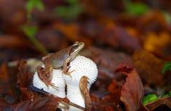 Frog on mushroom Stock Image
