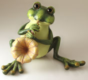 Frog Musician Stock Image
