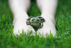 Frog on my feet. Royalty Free Stock Photography