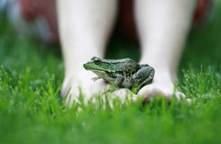 Frog N Feet Royalty Free Stock Images