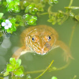 Frog in nature Stock Image