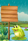 A frog near an empty wooden board Royalty Free Stock Images
