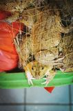 Frog in a net. Frog trapped in a net Royalty Free Stock Image