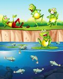 Frog next to the pond stock illustration