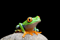 Frog On A Rock Isolated On Black Royalty Free Stock Photo