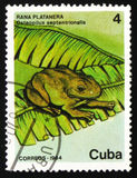Frog Osteopilus septentrionalis, circa 1984. MOSCOW, RUSSIA - FEBRUARY 19, 2017: A stamp printed in CUBA shows image of a frog Osteopilus septentrionalis, circa Stock Photo