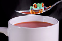 Frog over hot soup Stock Photo