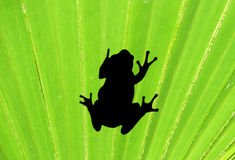 Frog on palm leaf Stock Photos