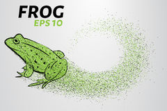 Frog of particles. The frog consists of small circles. Vector illustration Stock Photos