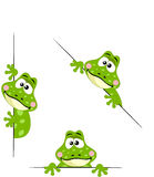 Frog peeking from behind in various positions Royalty Free Stock Photo