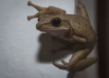 Frog peeking out from corner Stock Photos