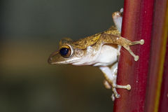 Frog perched on a tree Royalty Free Stock Images