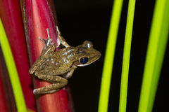 Frog perched on a tree Stock Images