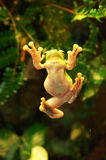 Frog. Photo. nature . additional formats not available Stock Photo
