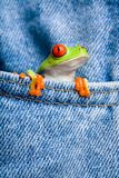 Frog in pocket Royalty Free Stock Photo