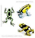 Frog Poison Dart Frog Frog Set Cartoon Vector Illustration 2 vector illustration