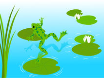 Frog pond. Green frog with water lilies Stock Photos