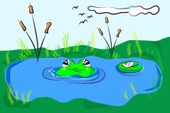 Frog in the pond Stock Images