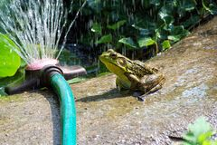 Frog Pond Stock Image