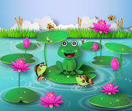 Frog in the pond. Royalty Free Stock Photo