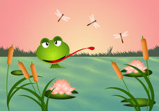 Frog in the pond Stock Image