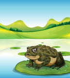 Frog and pond Stock Images