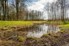 Frog pond in a nature reserve. Backlight image of a small puddle in a Dutch nature reserve. The still largely bare trees are reflected in the mirror-smooth water Royalty Free Stock Photos