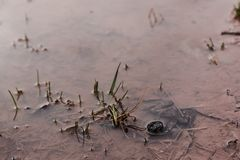 A frog in a pond on a spring morning stock photos