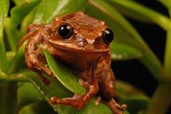 Frog portrait Stock Image