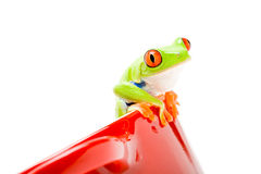 Frog on a pot. Frog sitting on a pot isolated on white Royalty Free Stock Image