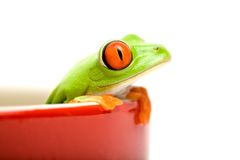 Frog in a pot isolated Stock Images