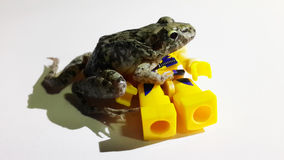 Frog is power Royalty Free Stock Images