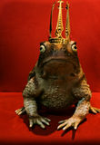 Frog Prince. Sitting on a chair, waiting to be kissed to change into a prince charming Stock Photo