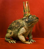 Frog Prince. Sitting on a chair, waiting to be kissed and change into a prince Royalty Free Stock Photo