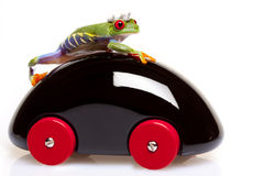 Frog Prince Driving Royalty Free Stock Images
