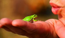 Frog Prince, Frog, Tree Frog Stock Photo