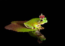 Frog prince on leaf. White-lipped tree frog prince with golden crown Royalty Free Stock Photography