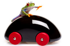 Frog Prince and Toy Stock Photography